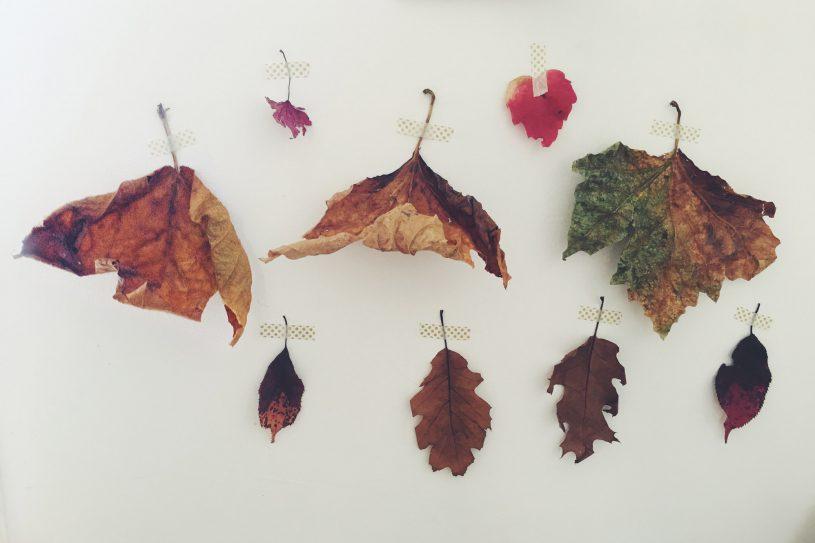 mid-herfst seizoensfeest